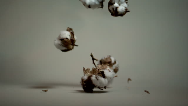 Fall of cotton flowers video