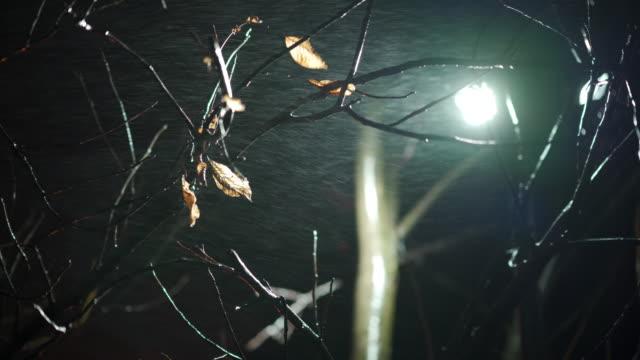 Fall rain at night street lamp light through tree branches, cold autumn night