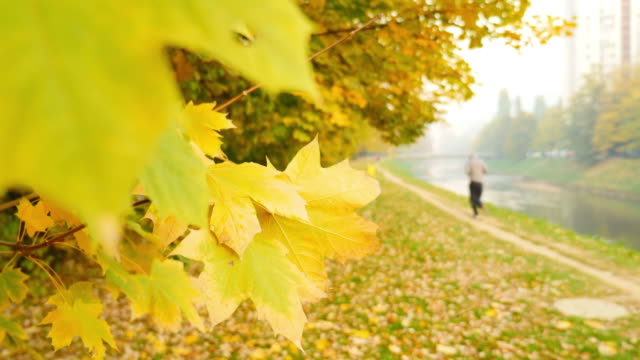 A fall scene with colorful leaves, and a man enjoying in jogging in the nature video