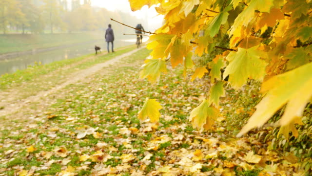 A fall scene with colorful leaves, and some people enjoying in the nature video