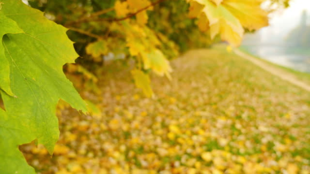 A fall scene with colorful leaves, camera falling to the ground imitating a leaf fall video