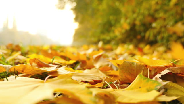 A fall season and a low angle shot of a ground full of leaves and some leaves falling on the ground video