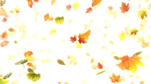 herbst oder herbst blätter (weiß)-loop - laub winter stock-videos und b-roll-filmmaterial