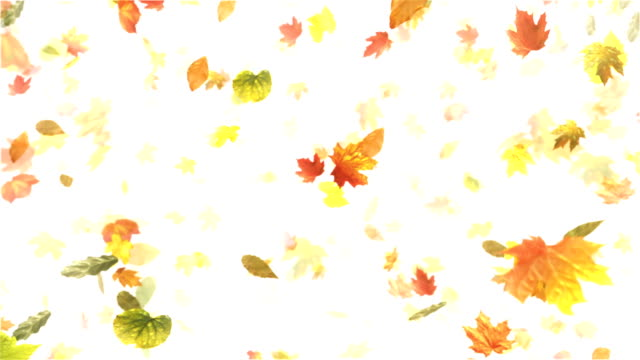 vídeos de stock, filmes e b-roll de outono, folhas de outono (branco)-loop - setembro amarelo