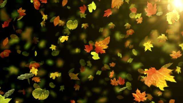 Fall/Autumn leaves (black) - Loop