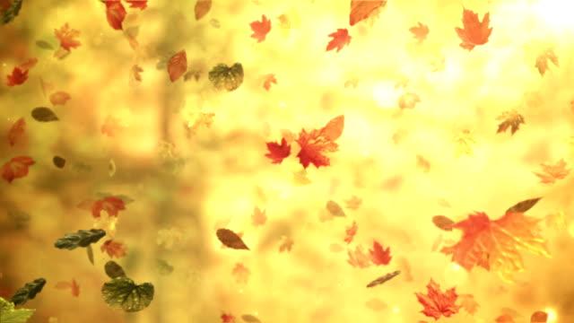 vídeos de stock, filmes e b-roll de outono, folhas de outono (floresta de fundo)-loop - setembro amarelo