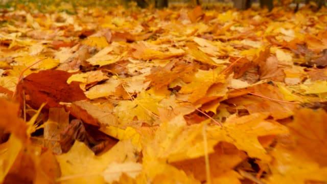 fallen autumn leaves. nature in fall. autumn onset concept. foliage on the ground. autumn background. slow motion. view from above. part of series - ноябрь стоковые видео и кадры b-roll
