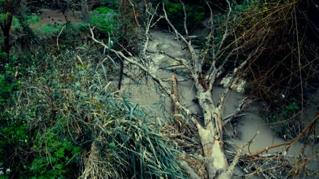 fallen dry tree crosses a stream in the forest - albero caduto video stock e b–roll