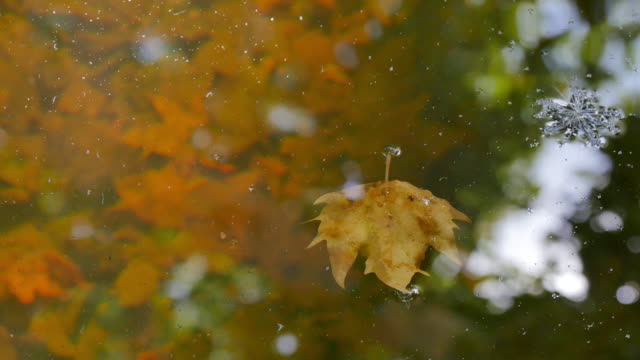 Fallen leaves reflected on surface of water, detail video