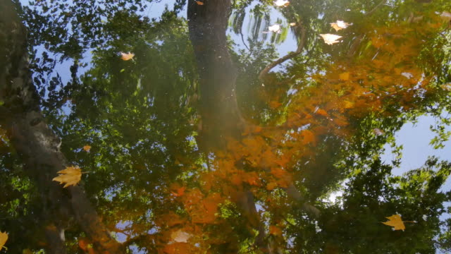 Fallen leaves reflections on surface of water video