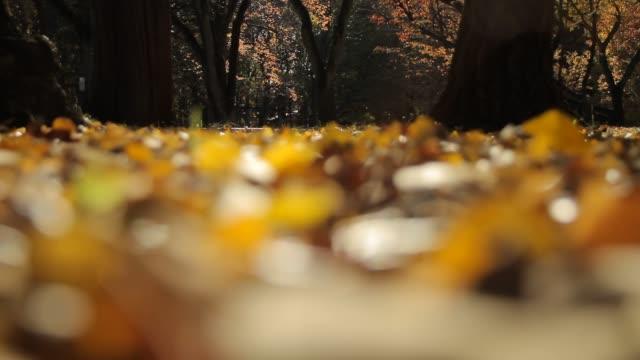 Fallen Leaves Musashino Park ginkgo stock videos & royalty-free footage