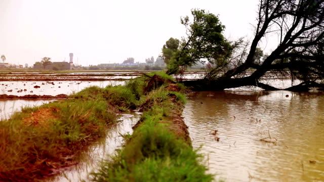 A fallen tree after hurricane video