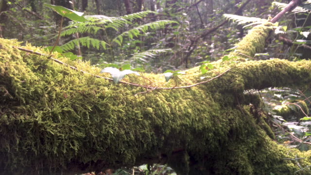 fallen tree covered by moss among the dense vegetation of a forest - albero caduto video stock e b–roll