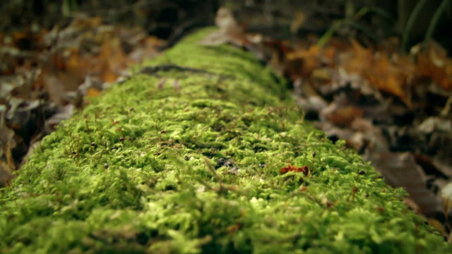 Fallen tree covered with moss video