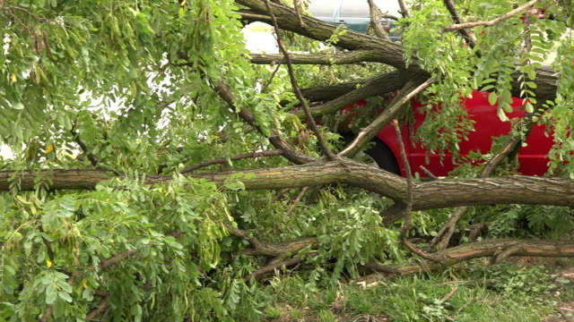 Fallen tree crushed a car underneath