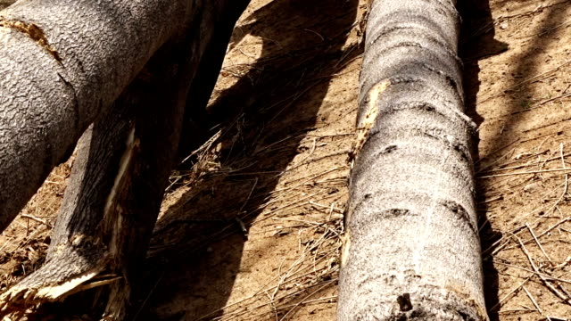 倒木 - ハリヤナ州点の映像素材/bロール