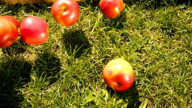 fallenden äpfel - apple stock-videos und b-roll-filmmaterial