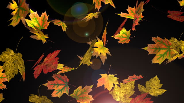 Falling Autumn Leafs - Loop Falling Autumn Leafs - Loop maple leaf videos stock videos & royalty-free footage