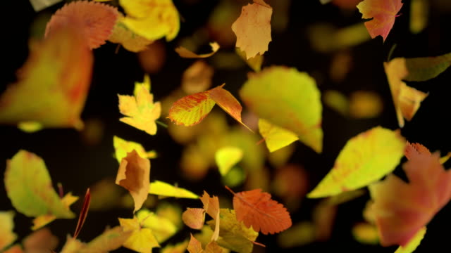 Falling autumn leafs loopable background in 4k