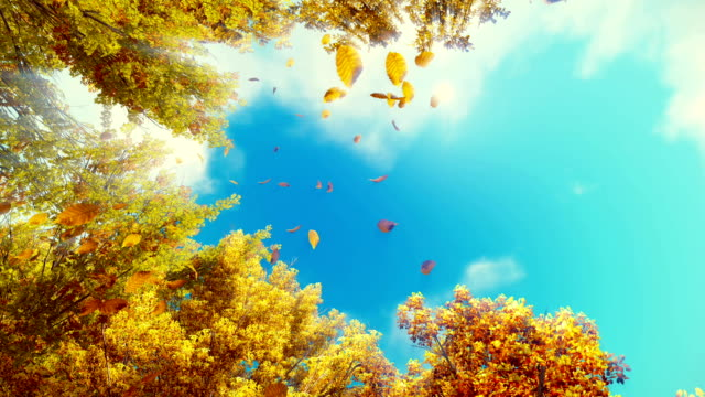 Falling autumn leaves against blue sunny sky slow motion video