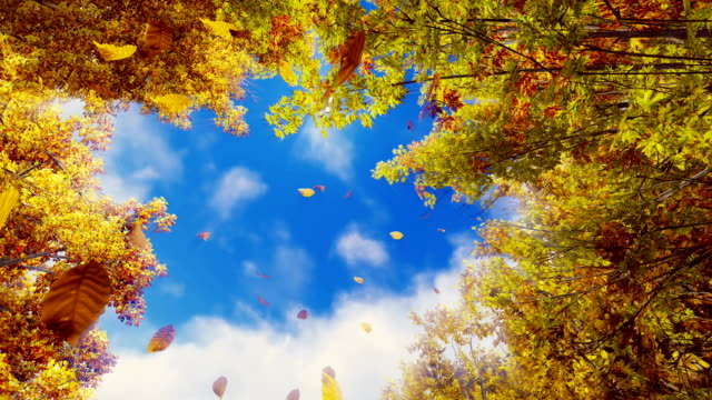 Falling autumn leaves against sunshine sky in slow motion video