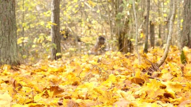 Falling autumn leaves - video