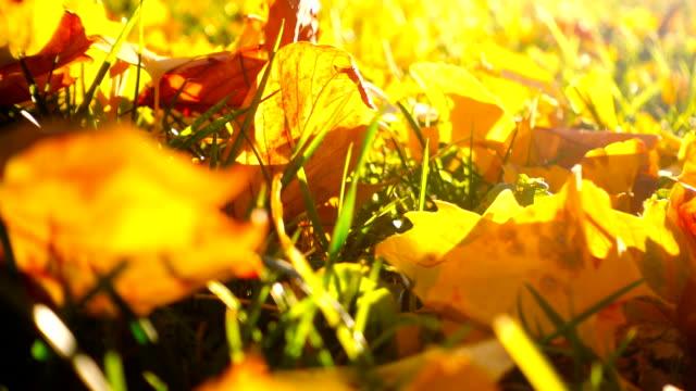 falling autumn leaves - ноябрь стоковые видео и кадры b-roll