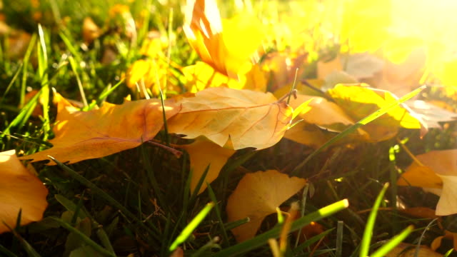 Falling Autumn Leaves video