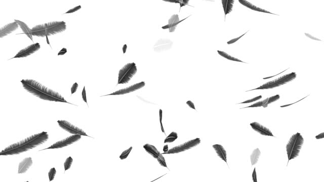 Falling feathers on a white background video