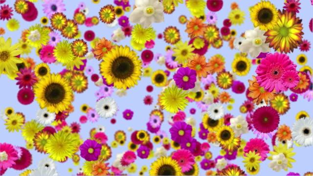 vídeos de stock e filmes b-roll de queda de flores - flower white background
