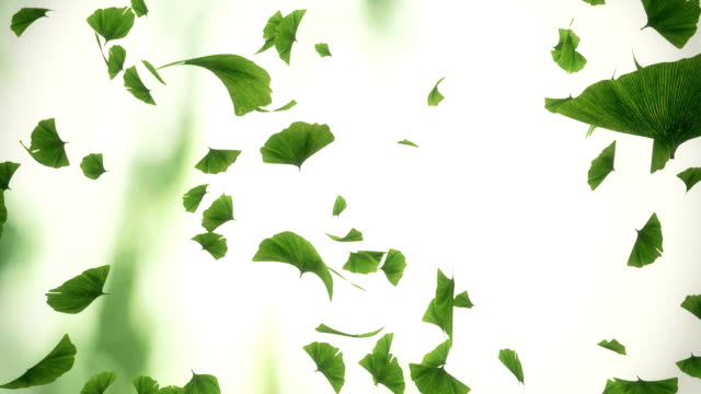 Falling gingko leaves - looped animation Seamlessly loopable 3d animation of gingko leves. Camera rotation. Blured background ginkgo tree stock videos & royalty-free footage