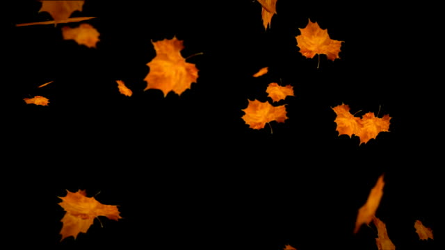 Falling leaves autumn loopable http://smdesign.eu/istock/is-ntr.jpg fall leaves stock videos & royalty-free footage