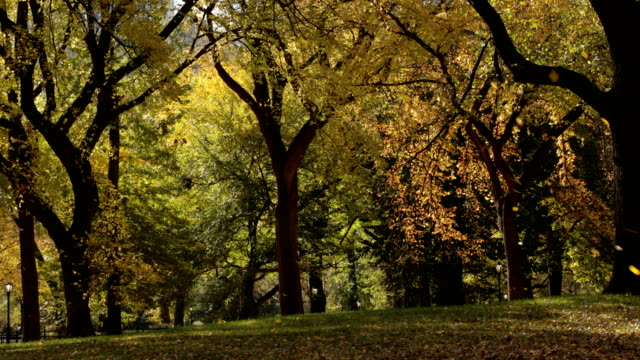 foglie cadenti a central park - inquadratura fissa video stock e b–roll