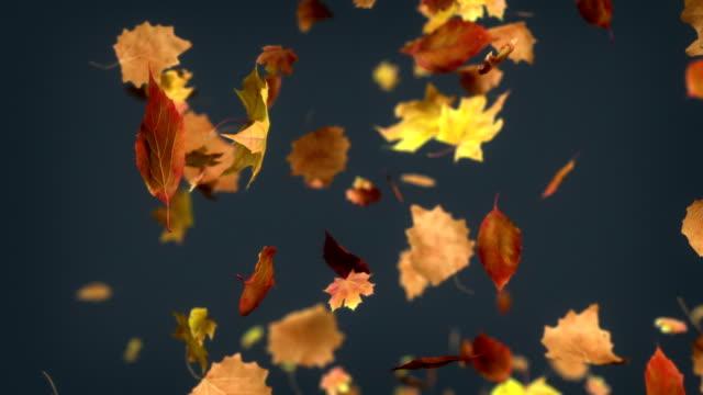 vídeos y material grabado en eventos de stock de hd: caída de las hojas en bucle de fondo - fall leaves