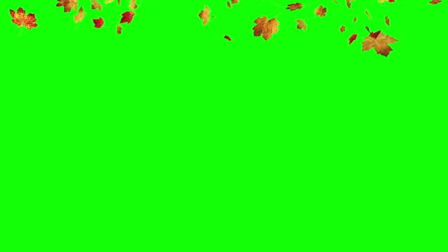 Falling leaves on green screen