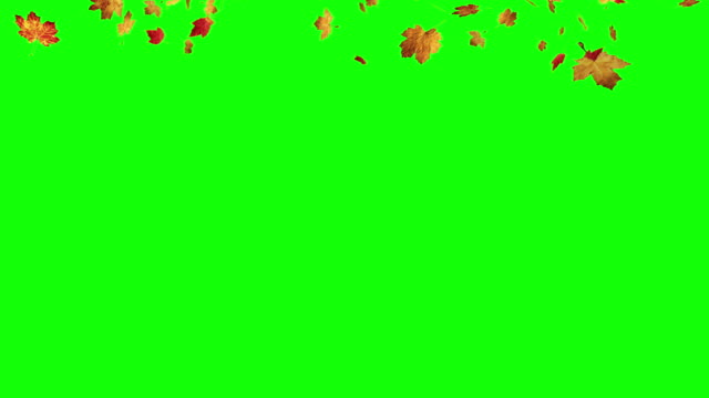 Falling leaves on green screen video