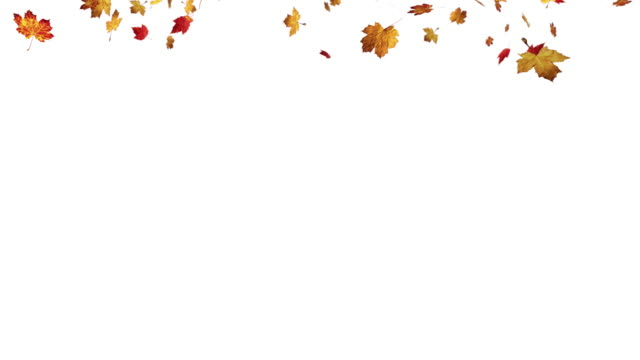 Falling leaves on white background video