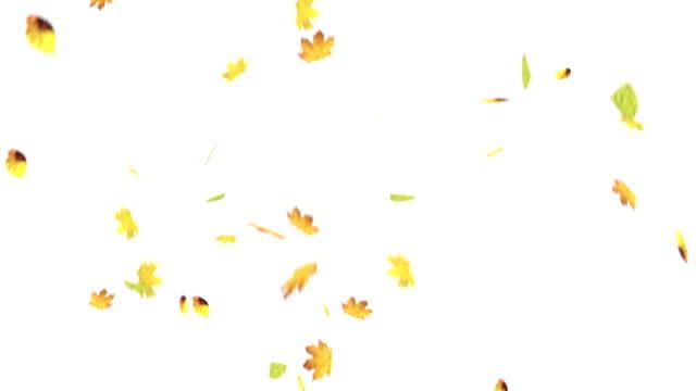 Falling leaves on white screen