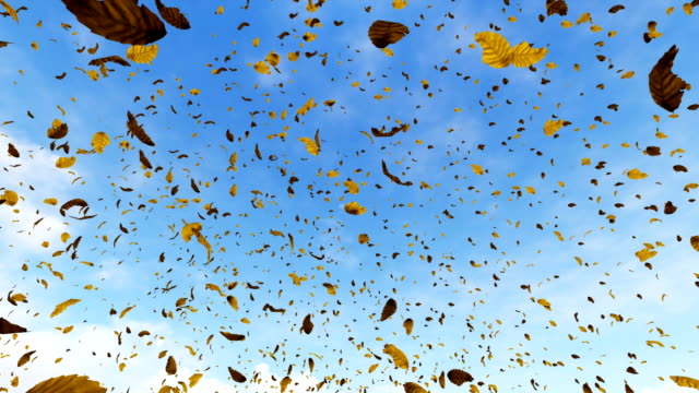 Falling leaves with blue sky in the background video