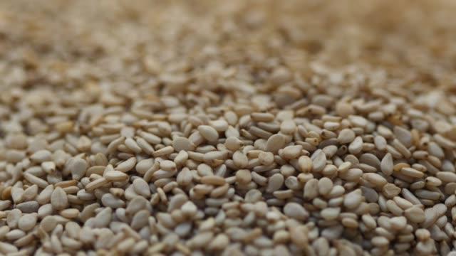 caduta di molti semi di sesamo - sesamo video stock e b–roll
