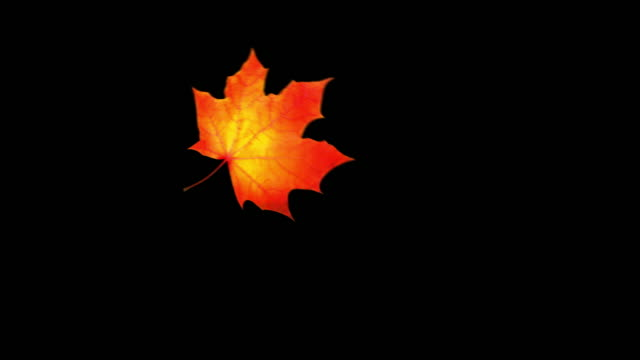 Falling Maple Leaf On Black Background With Alpha Channel