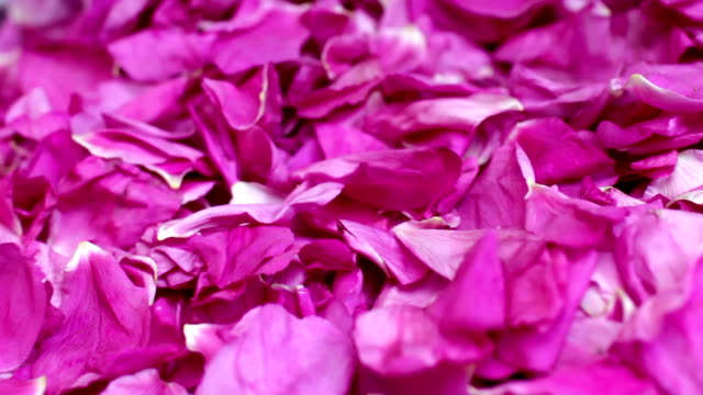 falling petals red rose Gathering rose petals bunch of pink rose close to bunch stock videos & royalty-free footage