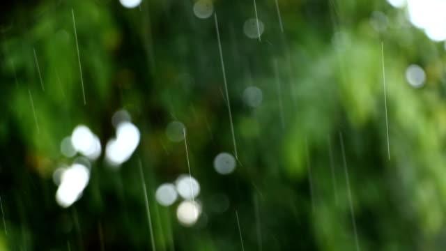 Falling rain and tree backgroun video