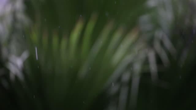 Falling Rain drops video