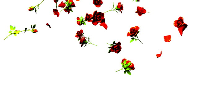 Falling Red Roses On White Background 3DCG render Animation. jp201806 stock videos & royalty-free footage