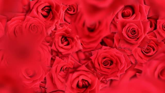 vídeos de stock, filmes e b-roll de fundo de rosas caindo - punhado