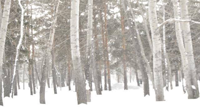 fallande snö i en winter park med snö täckt träd, slumpmässiga människor gå - lucia bildbanksvideor och videomaterial från bakom kulisserna