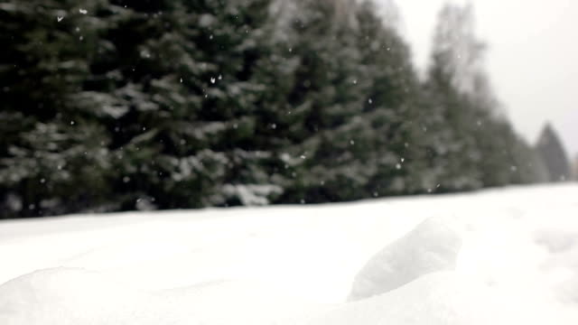 Falling snow in a winter park with snow covered trees. video