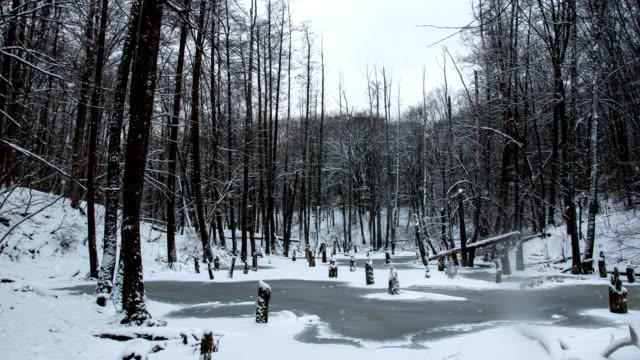 falling snow in a winter park with snow covered trees - decorazione per dolci video stock e b–roll