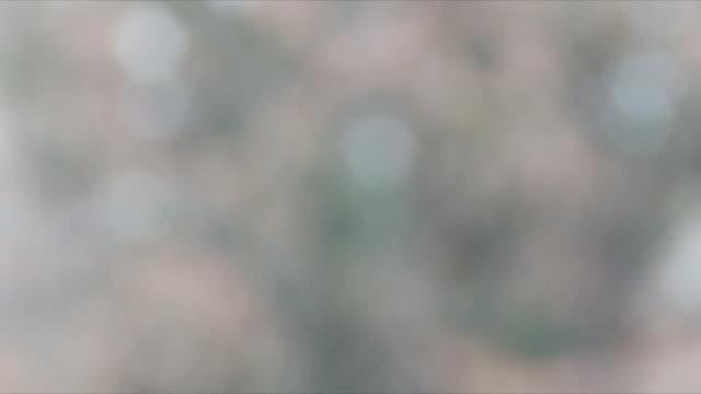 Falling snow in defocus video